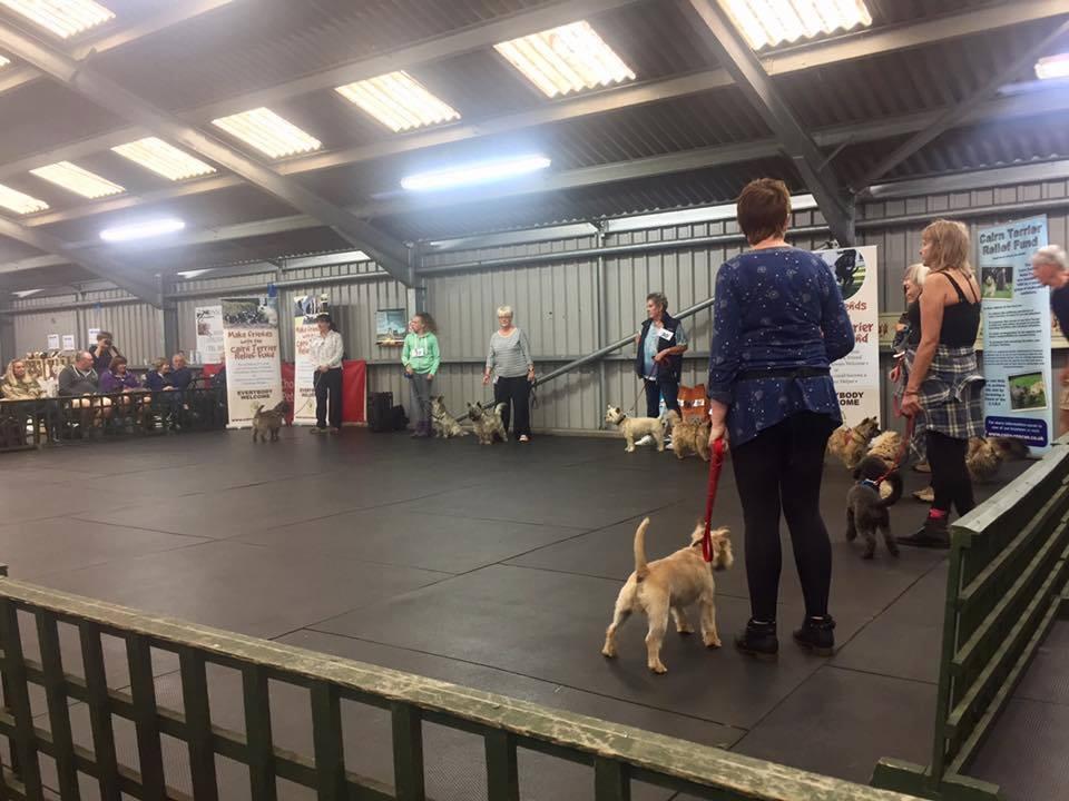 27 – Cairn Terrier Relief Fund