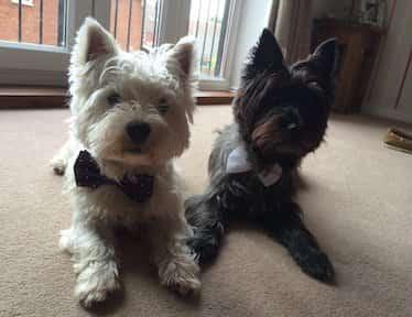 Cairn Terrier Relief Fund